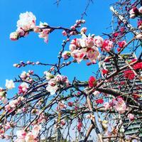 目黒天空庭園の写真・動画_image_163300