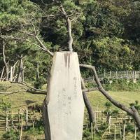 稲村ケ崎の写真・動画_image_165176