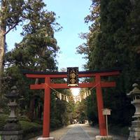 大崎八幡宮の写真・動画_image_171161