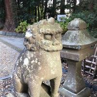 大崎八幡宮の写真・動画_image_171163