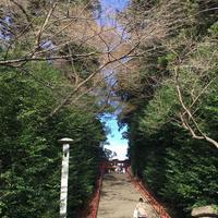 大崎八幡宮の写真・動画_image_171164
