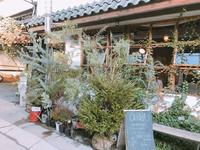 Cotoha(コトハ)の写真・動画_image_171176