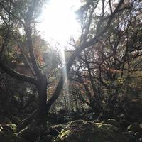 マゼノ渓谷の写真・動画_image_173042