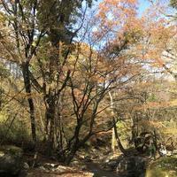 マゼノ渓谷の写真・動画_image_173045
