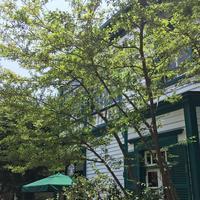 スターバックスコーヒー 神戸北野異人館店(STARBUCKS COFFEE)の写真・動画_image_174194