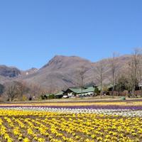 くじゅう花公園の写真・動画_image_174689