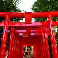 伊奴神社の写真・動画_image_174720