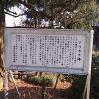 清林寺の写真・動画_image_176231
