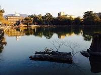 猿沢池の写真・動画_image_177076