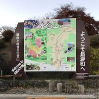 宝登山の写真・動画_image_178013
