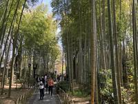 修善寺の写真・動画_image_187540