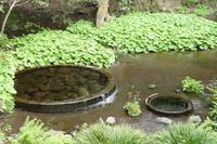柿田川公園の写真・動画_image_187550