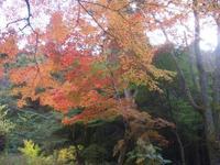靱公園の写真・動画_image_187559