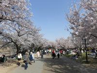 大阪城公園の写真・動画_image_187565