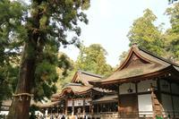 大神神社の写真・動画_image_187692