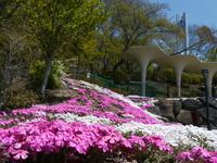 立石公園の写真・動画_image_188507