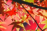 成田山公園の写真・動画_image_188704