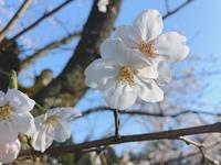 成田山公園の写真・動画_image_188711