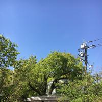 佐賀県護国神社の写真・動画_image_188857