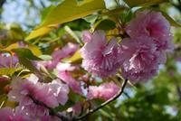 桜の名所の写真・動画_image_189104