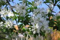 いつも花が咲いているの写真・動画_image_189109