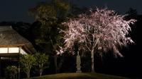 三溪園の写真・動画_image_189371