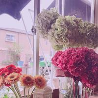 フラワースタイル・ラズリの写真・動画_image_189756