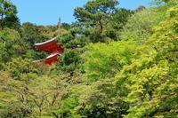 今熊野観音寺の写真・動画_image_189993