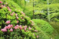 今熊野観音寺の写真・動画_image_189998