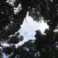 打吹公園の写真・動画_image_193352