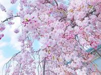 嵐山公園の写真・動画_image_195140
