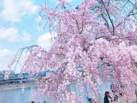 嵐山公園の写真・動画_image_195141