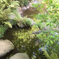 東京都庭園美術館の写真・動画_image_195167