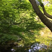 東京都庭園美術館の写真・動画_image_195171