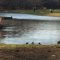 代々木公園の写真・動画_image_195180