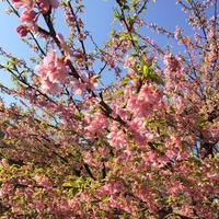 代々木公園の写真・動画_image_195182