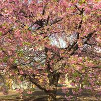 代々木公園の写真・動画_image_195183
