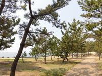 あらい浜風公園の写真・動画_image_196329