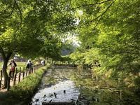 モネの池の写真・動画_image_199029