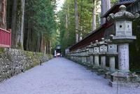 日光二荒山神社の写真・動画_image_199356