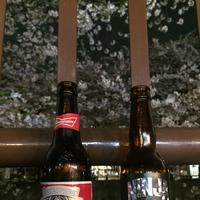 目黒川の桜並木の写真・動画_image_202048