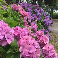 稲村ケ崎海浜公園の写真・動画_image_204005