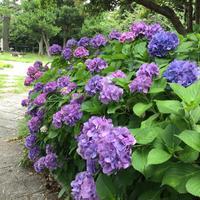 稲村ケ崎海浜公園の写真・動画_image_204006