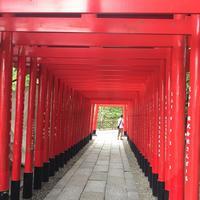 犬山城の写真・動画_image_205403