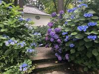 真如堂(真正極楽寺)の写真・動画_image_207324