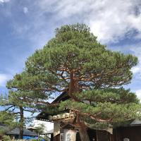 飛騨高山枝神社の写真・動画_image_208940