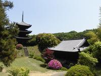 如意寺の写真・動画_image_210969
