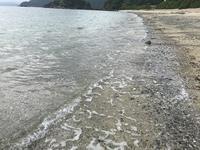 ヤドリ浜自然海水浴場の写真・動画_image_212079