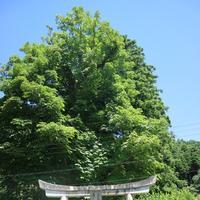 稲荷神社の写真・動画_image_212596