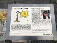 奇跡の一本松の写真・動画_image_216628